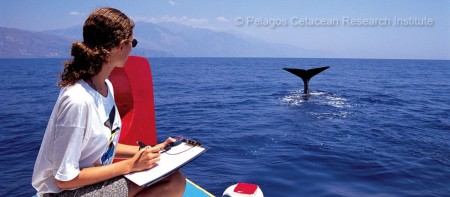 Research on Cetaceans in Greece